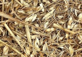 wheat-from-chaff